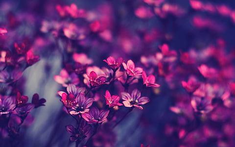 flor, flor, close-up, flora, flors, macro, flor