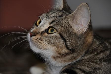cat, eyes, animals, cat eyes, cute, cat's eye, pet