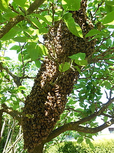hive, bees, tree, beekeeper, beekeeping, nature, bee breeding