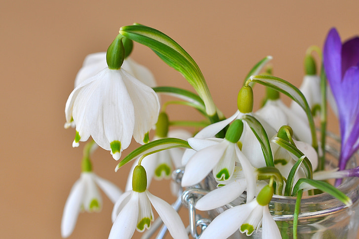 lily of the valley, snowdrop, signs of spring, flower, plant, flowers, white