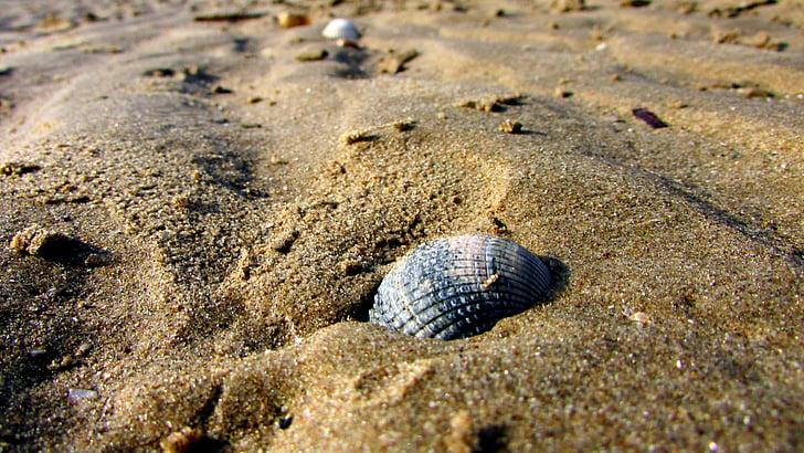 closca a la platja, sorra, platja, Mar, l'estiu, closca, closca