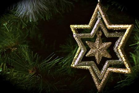 christmas, star, fir, festival, joy, winter, decorations