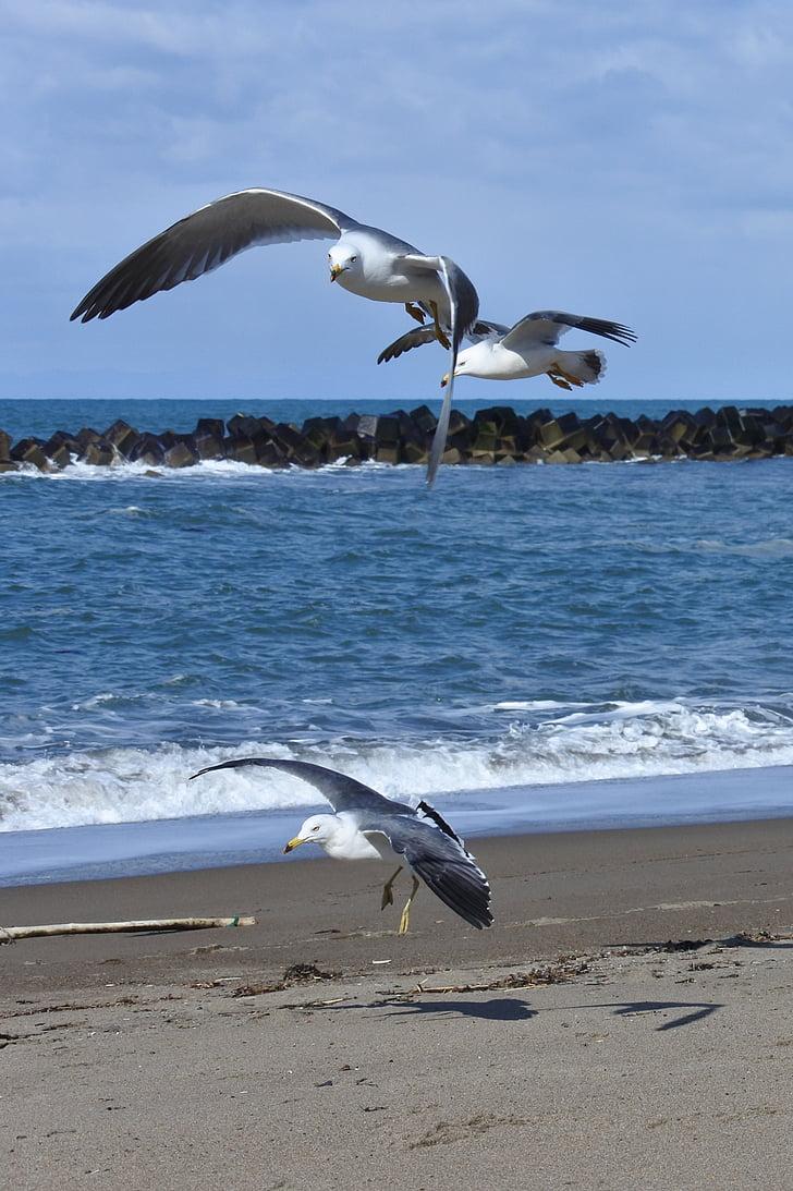zvíře, obloha, mrak, Já?, pláž, vlna, Sea gull