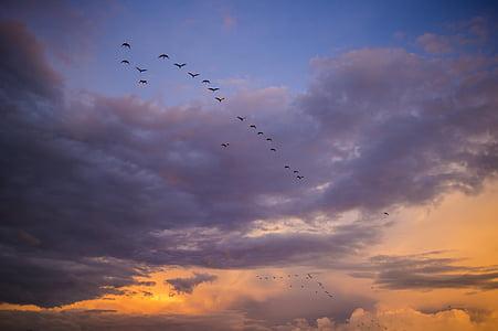 migració, ocells, Àfrica, posta de sol, migració, cel, cel taronja