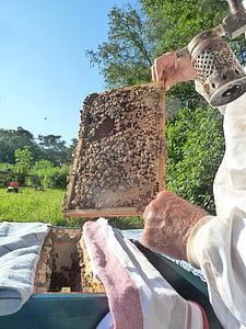 apicultor, abelles, bresca, colomar