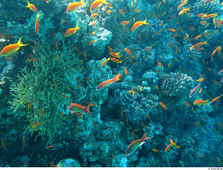 ocean life, under water, colorful, fish, corals, sea, animal