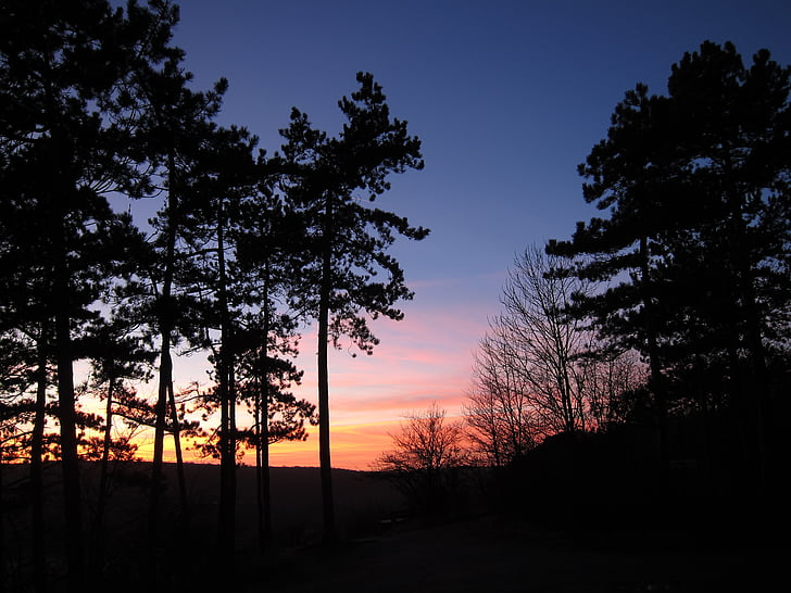zalazak sunca, šuma, abendstimmung