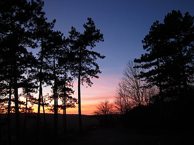 일몰, 숲, abendstimmung