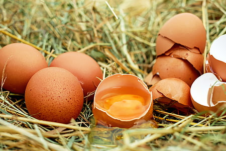 ou, ous de gallina, ous crus, eggshell, rovell d'ou, Bio, herba
