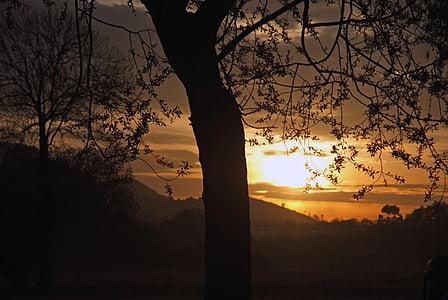 dawn, sun, field, light, tree, nature