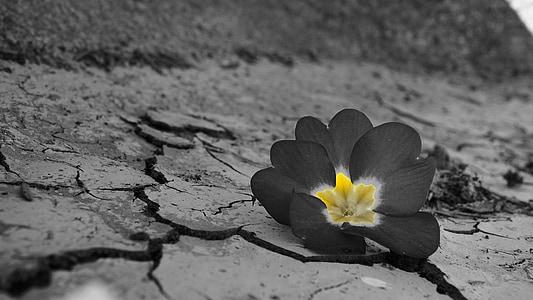 Foto Livre Flor Deserto Seca Seca Natural Hippopx