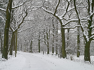 winter magic, forest path, snowy, wintry, forest, snow, winter