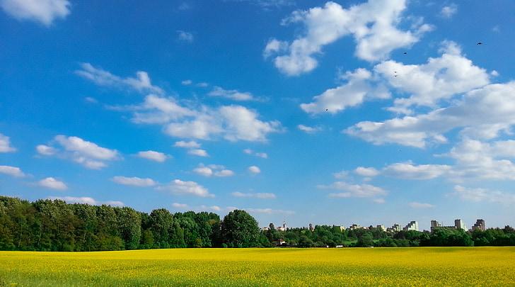 sky, landscape, spring, fields, field, view
