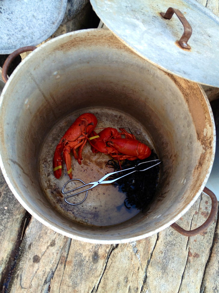 Free photo: lobster, lobster pot, maine, pot, lobsters ...