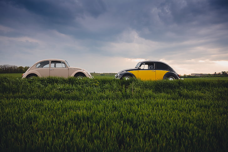 automobile, automotive, beetles, cars, countryside, field, grass