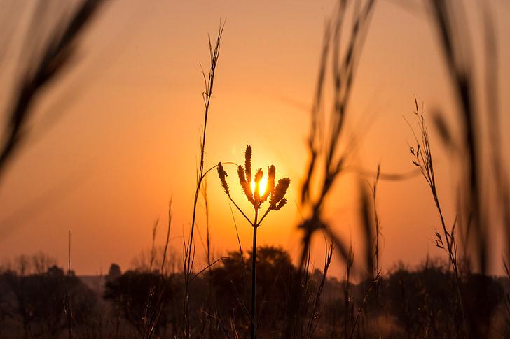 posta de sol, planta, flor, paisatge, natura, sol, cel