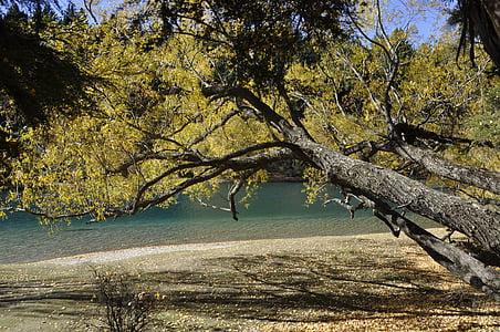natura, paisatge de fons, paisatge de naturalesa