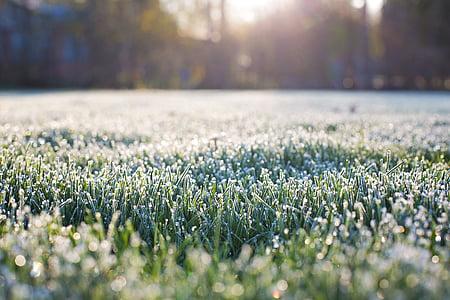 escarcha sobre la hierba, temprano en la mañana, Frost, Mañana, bokeh en pasto, hierba, naturaleza