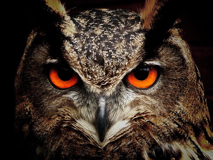 Сова, птица, глаза, Филин, птицы, вид, Животные