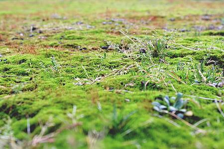point de riz, au sol, sol en pierre, vert, nature, automne, plante