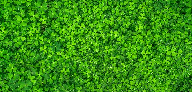 φύλλο, φύση, πράσινο, άνοιξη, Περίληψη, φυτά, στάλα