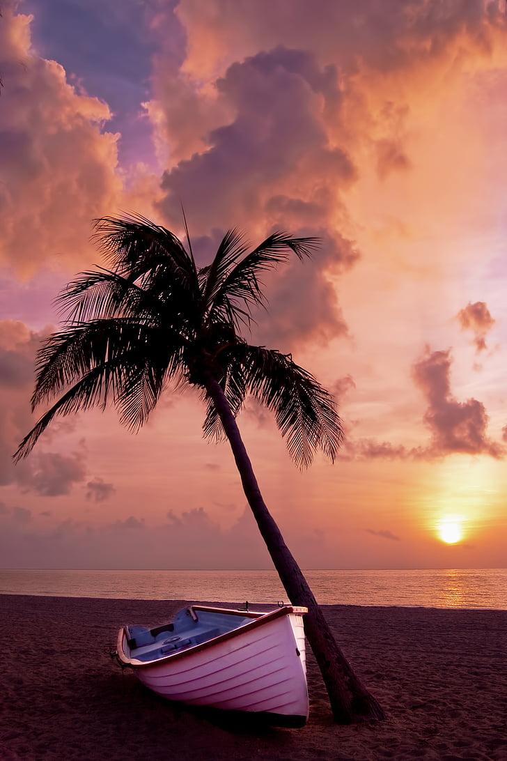 palmeira, Palm, oceano, Verão, férias, barco, praia