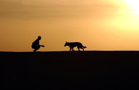 hund, træner, silhuetter, Sunset, Schæferhund, horisonten, canine