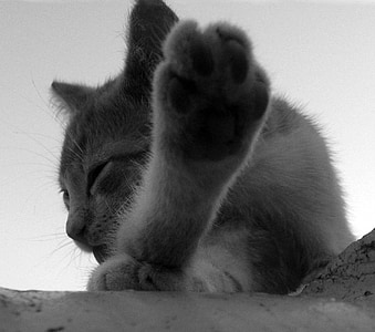子猫, 猫猫, ひよこ