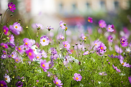 rohumaa, väike lill, puhas, lill, loodus, taim, Valikuline fookus