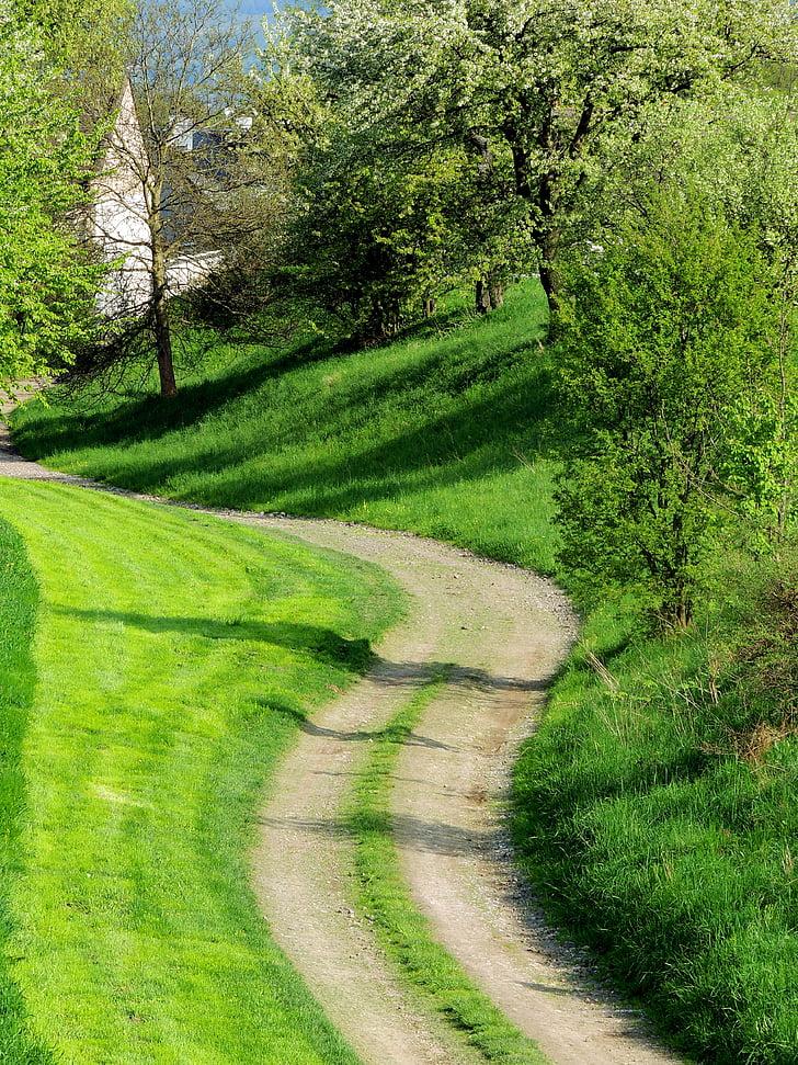 chuyến đi trường, Thiên nhiên, cây, cảnh quan, màu xanh lá cây, mùa xuân, chuyến đi