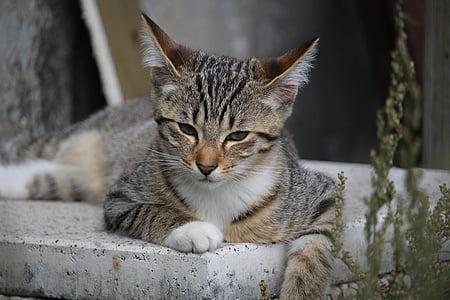 cat, kitten, mackerel, cat baby, young cat, domestic cat