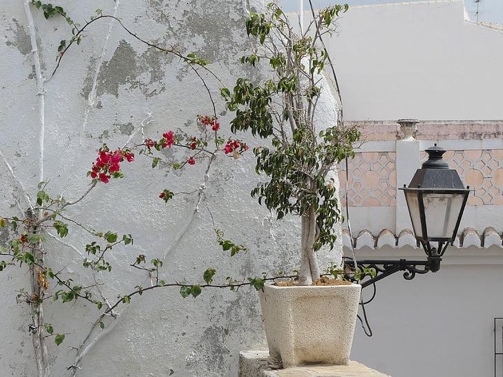 horolezec, Nástenné, Zelená, zapliesť, zelené rastliny, Lampáš, Španielsko