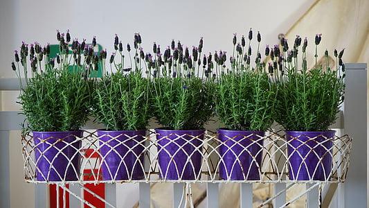 thực vật, nồi, màu xanh lá cây, Hoa, làm vườn, chậu, lọ hoa