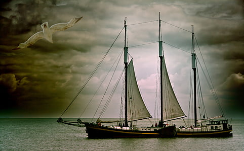sailing boat, boot, seagull, water, sea, ship, lake