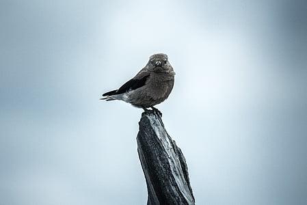 zviera, Vtáčia, vták, milý, posadené, perie, jedno zviera