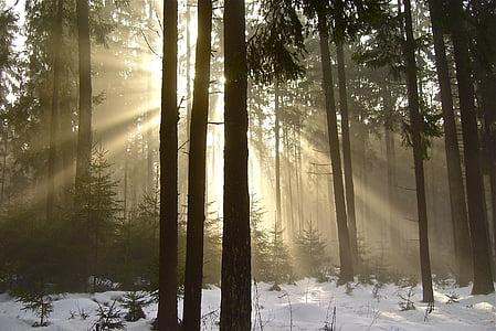 bosc, boira, natura, arbres, estat d'ànim, l'hivern, llum del sol