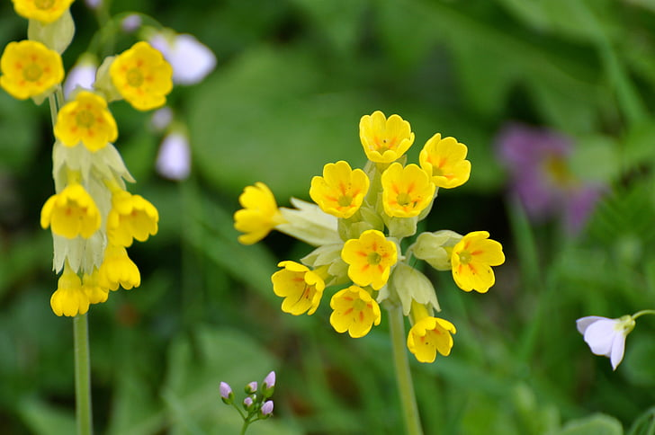 hello, yellow flowers, country, fleurs des champs, spring, yellow flower, flower