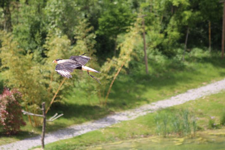 ocells, vol, voltar