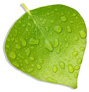 listy, Zelená, Príroda serengeti, sviežosť, Leaf, Príroda, Zelená farba