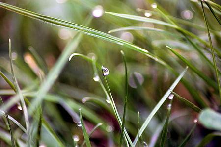 滴眼液, 露水, 草, 宏观, 自然, 绿色, 露珠