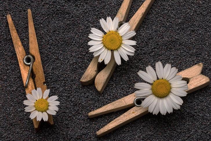 seemned, mooniseemned, clothespins, lilled, loodus, Suurendus: