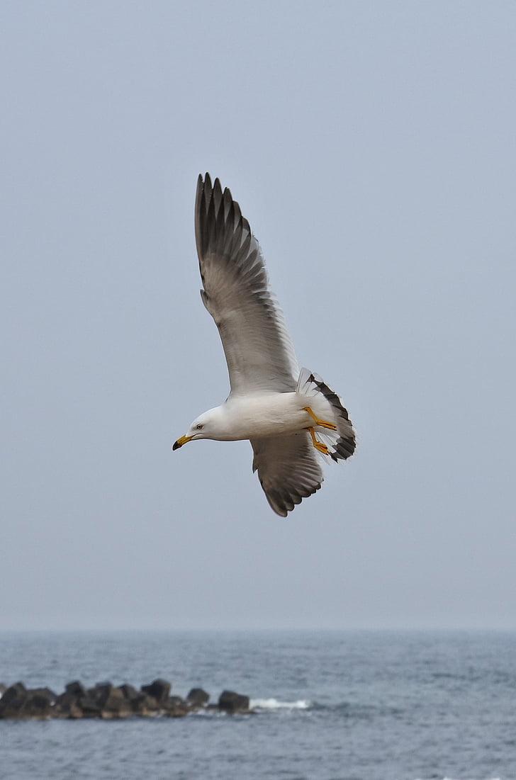 zvíře, Já?, pláž, Sea gull, Racek, Mořský pták, divoké zvíře