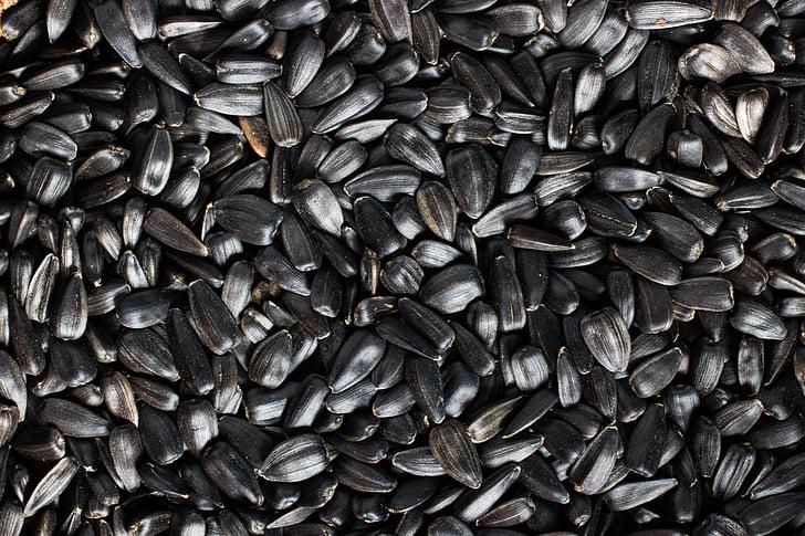 Семена подсолнечника, подсолнечник, Семена, черный, нажав, Много, питание