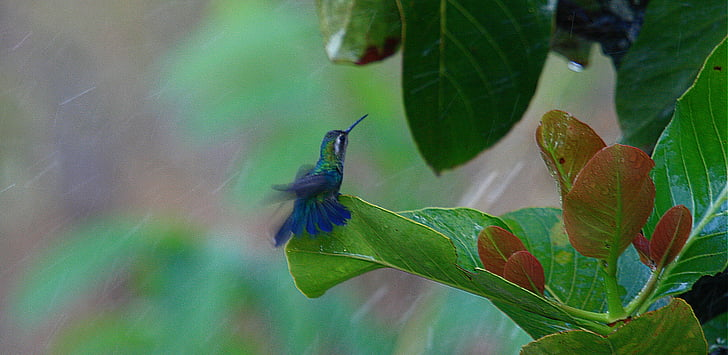 hummingbird, bird, nature, leaf, insect