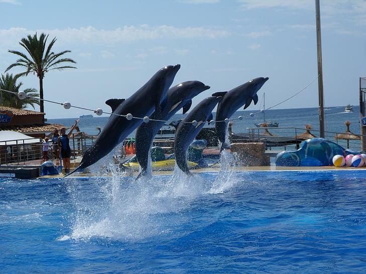 djur, vatten, Dolphin, akvarium, Zoo, havet, nautiska fartyg