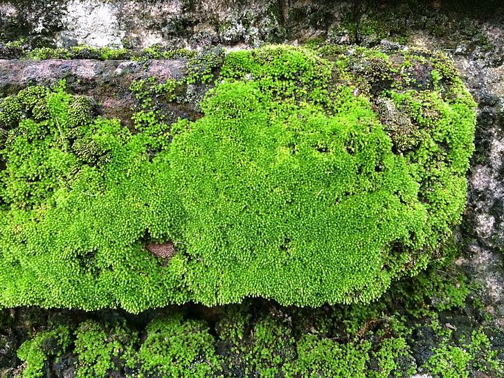 natura, molsa, Roca, verd, textura