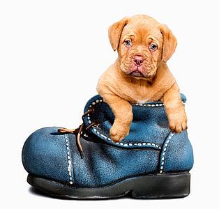 catelus, câine, drăguţ, canin, animal de casă, animale, alb