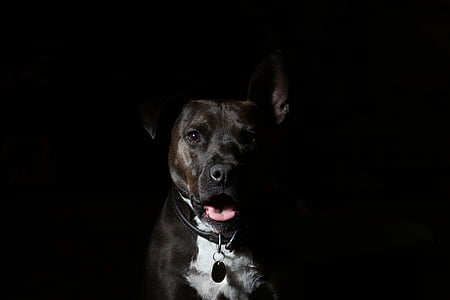 animale, canin, câine, animal de casă, animale de companie, un animal, animale domestice