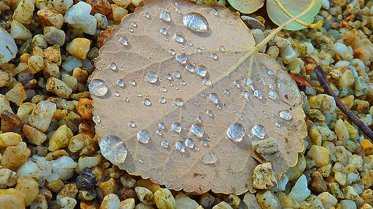 sonbahar yaprakları, Sonbahar, sonbahar yaprak, sonbahar renk, yaprakları, orman yolu, ağaç