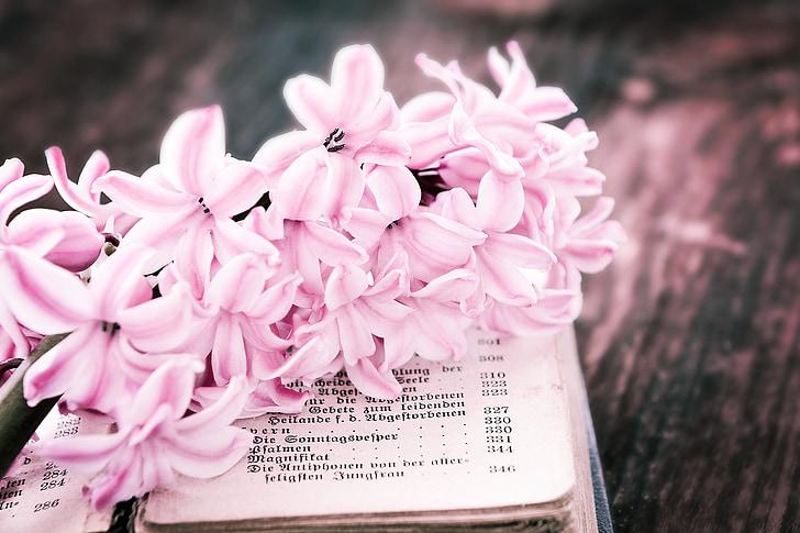 bunga, eceng gondok, merah muda, bunga, wangi bunga, wangi, buku